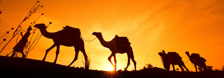 Page_Banners_Camels2