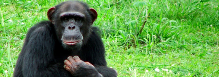 Page_Banners_Chimp1