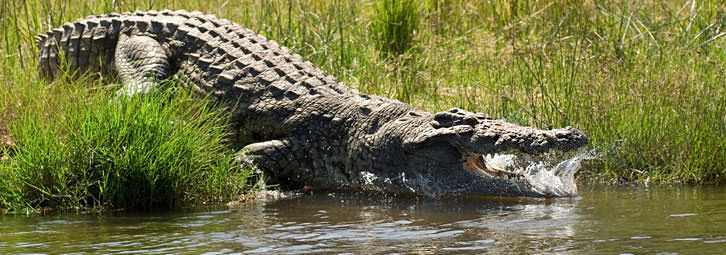 Page_Banners_Croc11