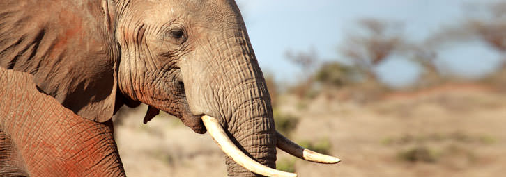 Page_Banners_Elephant12