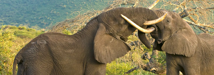 Page_Banners_Elephants2