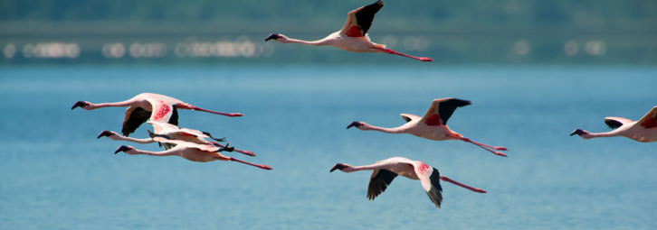 Page_Banners_Flamingos2