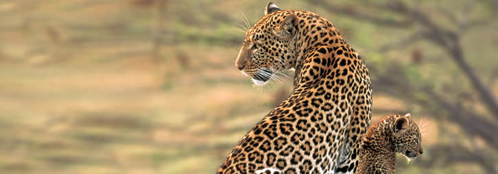 Page_Banners_Leopard1