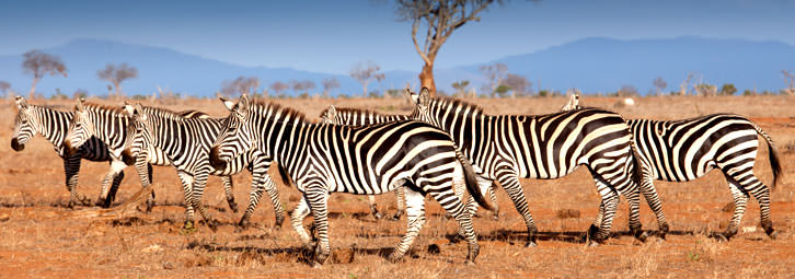 Page_Banners_Zebra2